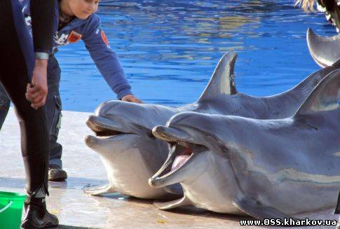 dolphin shows in Kharkiv