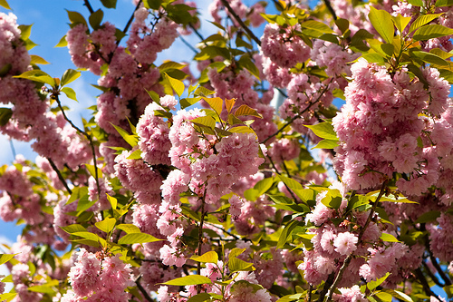 Uzhgorod in spring